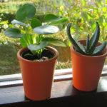 choisir plante appartement